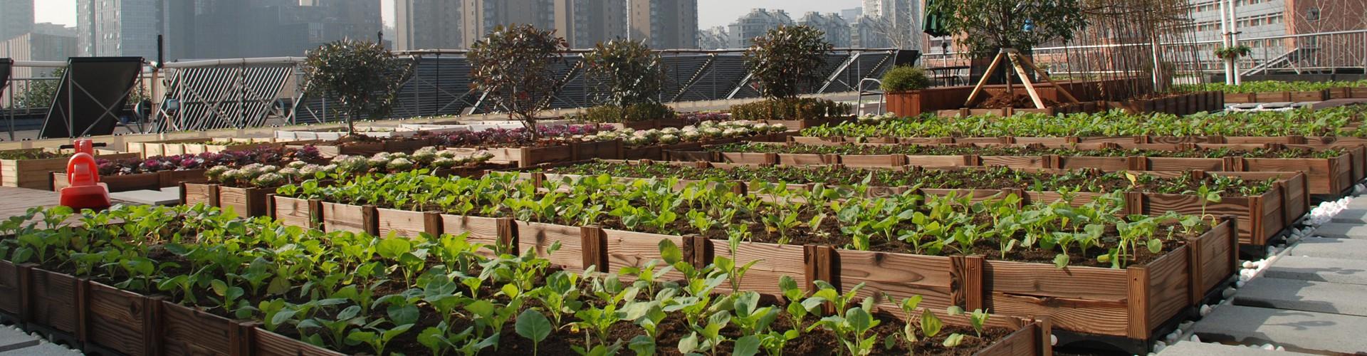 种菜小庭院设计实景图